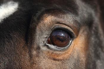 Oogproblemen bij een paard