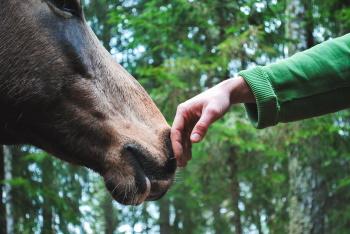 Paarden als huisdier